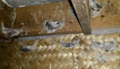 Sirip Walet Dari Bambu (Besek) Burung Walet Cepat Bersarang