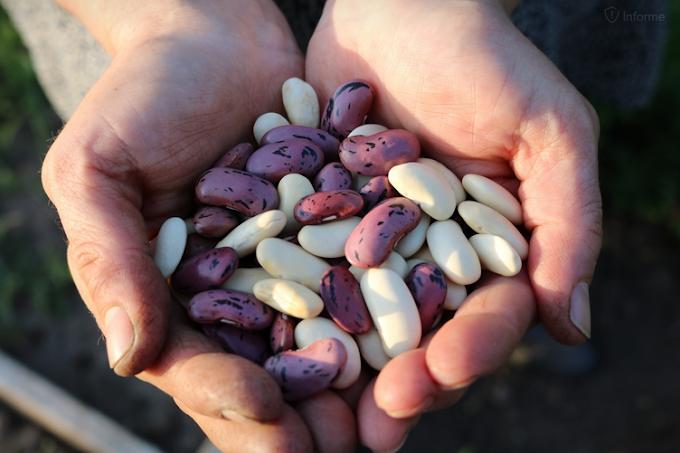 Ο αγρότης και τα φασόλια στην τσέπη του...