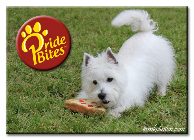 White West Highland Terrier with PrideBites pizza toy