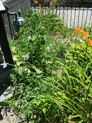 By Paul Jung Gardening Services--a Toronto Gardening Company Leslieville Front Garden Summer Cleanup Before