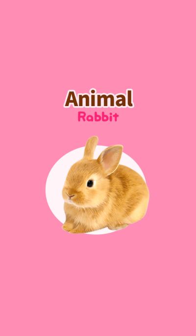 Animal -Rabbit-