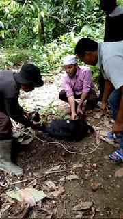 LPDA Qurban di Perdalaman Aceh