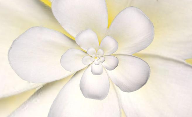 Flor Droste