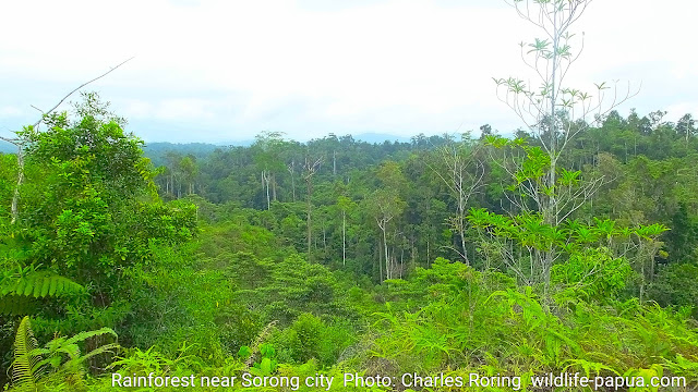 Hiking tour in Sorong ridge forest of Republic of Indonesia