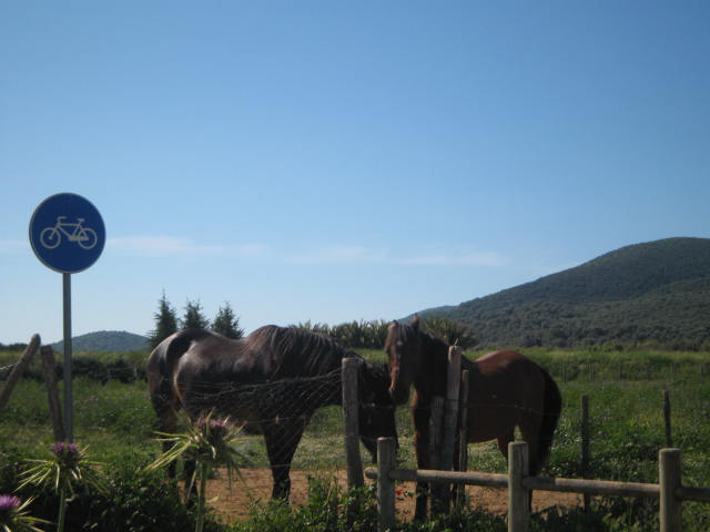 Maremma horses inspecting national park cycling path