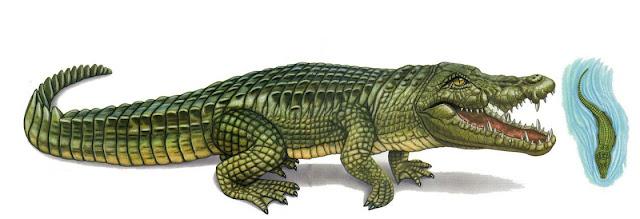 Deinosuchus, el dinosaurio cocodrilo