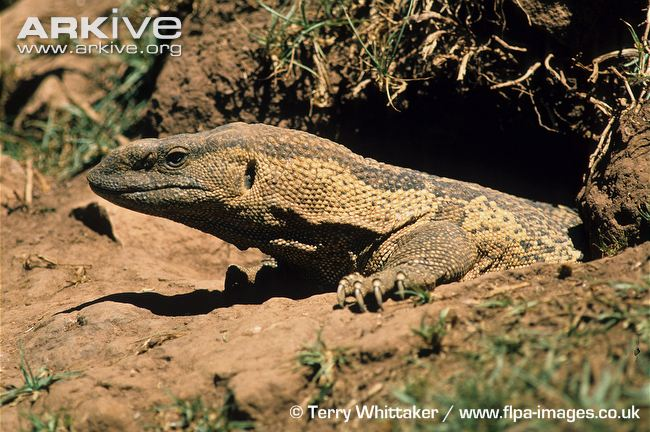 Epic's Interactive Blog: Reptiles found in the Kruger ...
