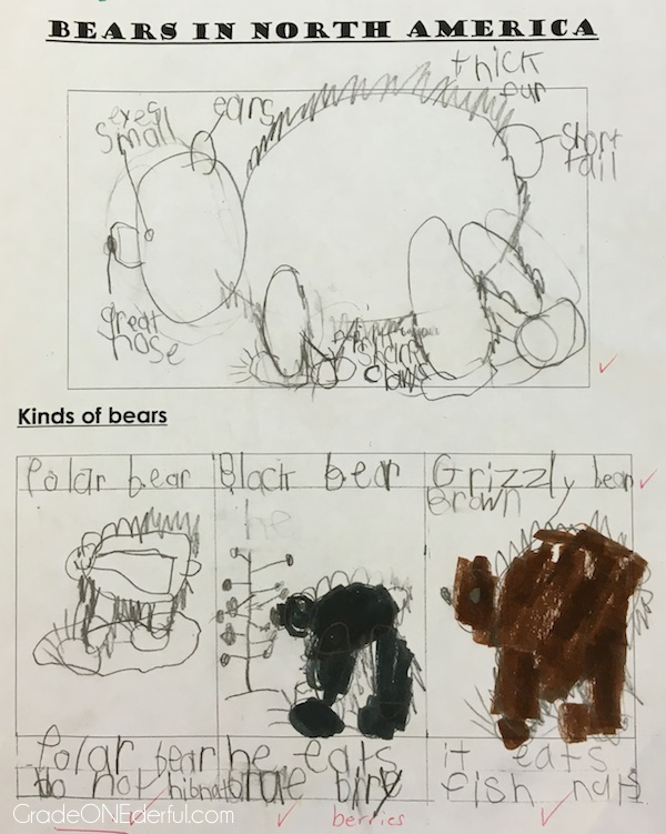 Bear studies in a grade 1 class.