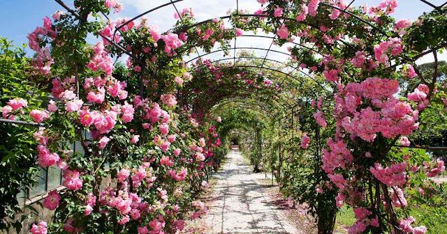 Choosing a Garden