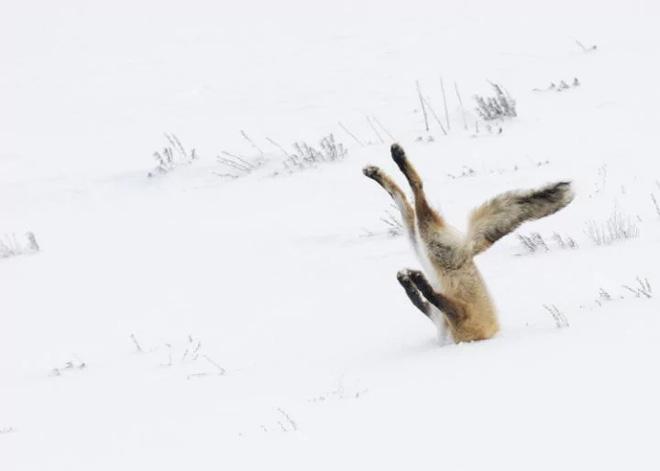 Chiêm ngưỡng những bức ảnh hài hước về động vật đã đạt giải tại cuộc thi Comedy Wildlife Photography Awards 2017