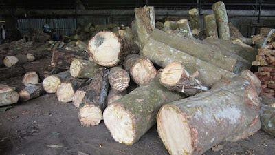gỗ cao su tròn nguyên liệu gỗ bình dương