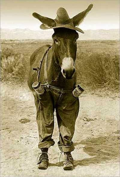 funny donkey jackass joke image