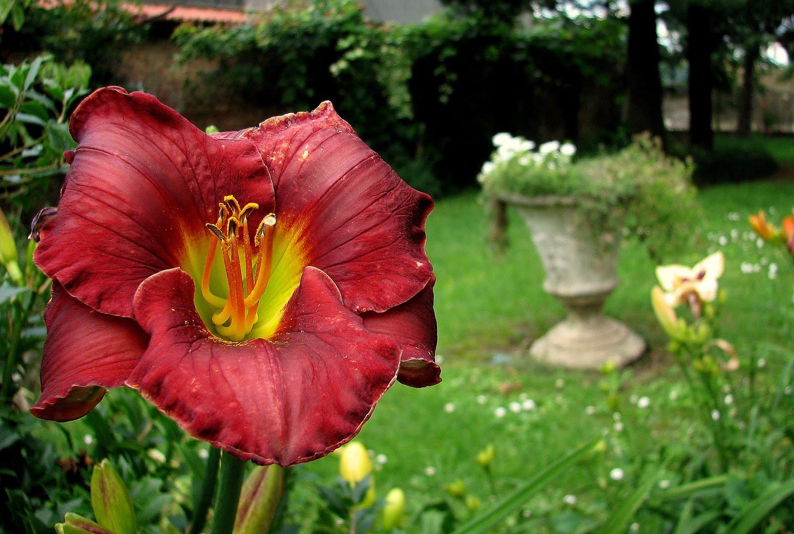 L 39 orto dei colori giugno 2011 for Dalie giganti