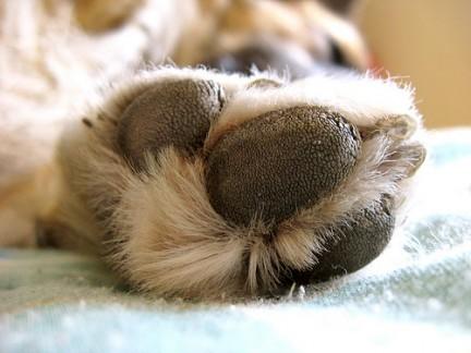 Risultati immagini per bruciature ai polpastrelli dei cani
