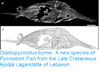 https://sciencythoughts.blogspot.com/2016/07/gladiopycnodus-byrnei-new-species-of.html