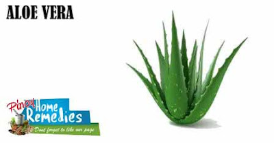 Home Remedies For Peeling Fingertips: Aloe Vera