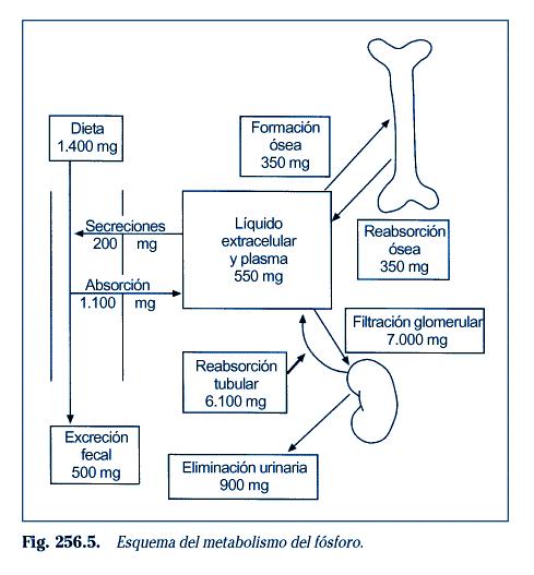 Niños trabajo y Cómo aumentar el metabolismo
