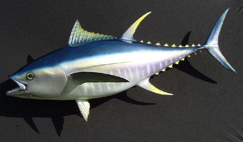 Ikan Laut Tuna