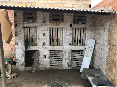 IMG 20180121 WA0514 - Polícia Militar fecha em Barra do Corda RINHA onde ocorria brigas de galos - minuto barra