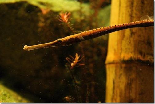 Cách nuôi cá Hải Long