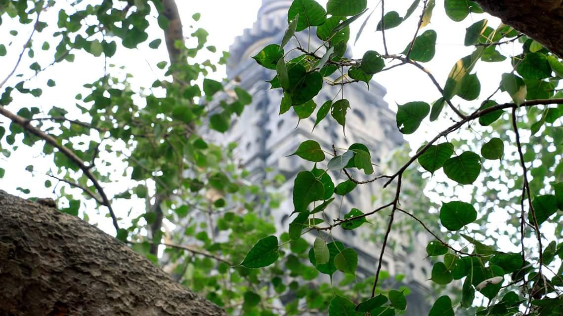 SÓNG GIÓ CÂY BỒ ĐỀ Ở THÁP ĐẠI GIÁC – BODDHI TREE AT BODHGAYA