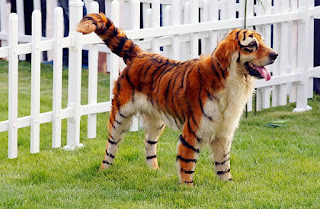 """Now Your Dog May Become a Tiger """"Animal Mutation"""" 1"""