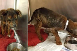 Nobody want him....no-one saw this 'ugly' baby as worthy of saving and euthanasia has been scheduled