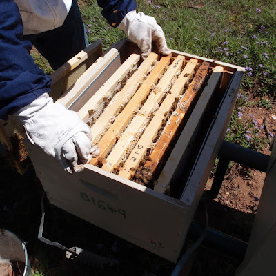 eight acres: How we control small hive beetle without chemicals