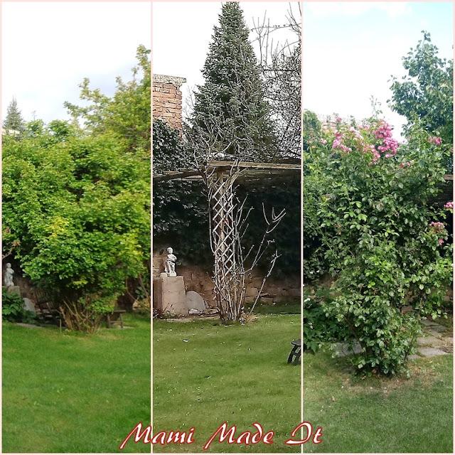 Rosenrückschnitt - Prune Roses