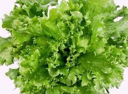 салат айсберг для салатика с тунцом