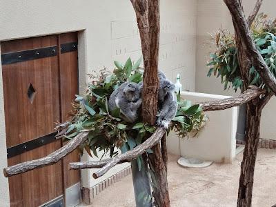 神戸市立王子動物園 コアラ