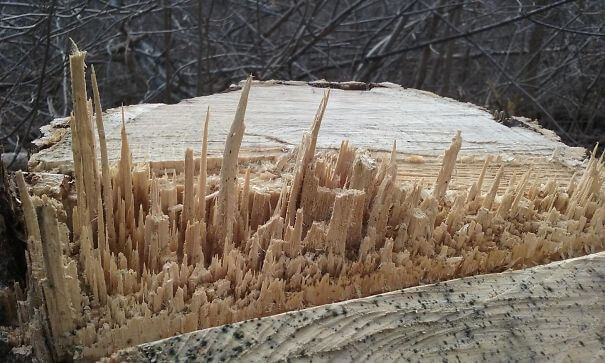 20 Pictures Prove That 'Accidental' Art Can Be Astonishing - The Way This Wood Split Looks To Me Like A City Skyline