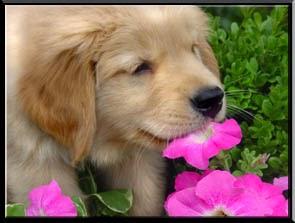 Como Ense Ar A Un Cachorro A No Morder Las Plantas Super