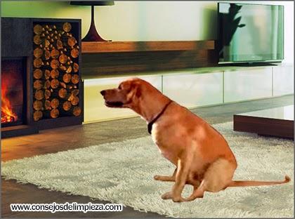 Remedios para eliminar el olor a mascotas en casa consejos de limpieza trucos tips y - Quitar olor a pis de gato ...
