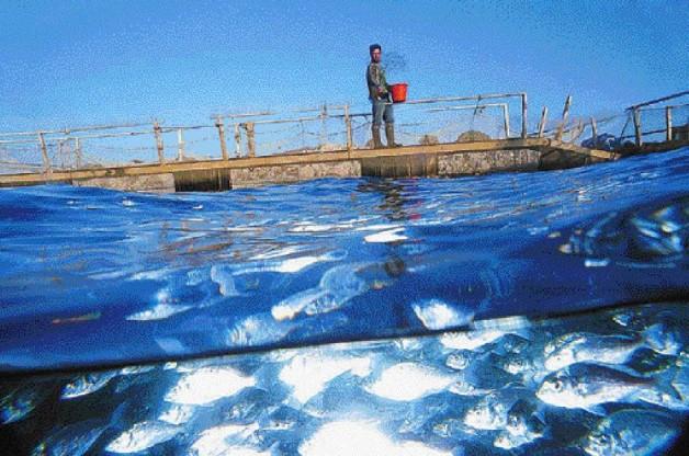 Θεσπρωτία: Ο αλιευτικός τομέας, οι υδατοκαλλιέργειες και η μεταποίηση αλιευμάτων έχουν μέλλον στη Θεσπρωτία, τονίστηκε σε ημερίδα στη Νέα Σελεύκεια