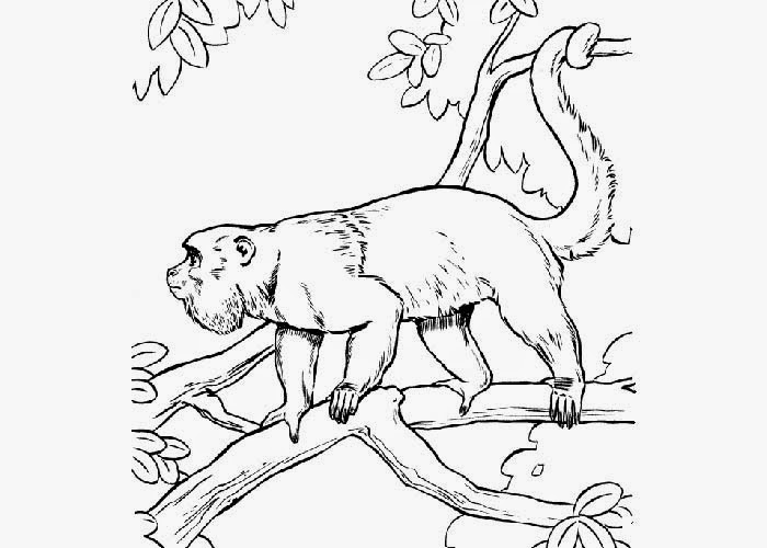 Howler monkey coloring pages Free Coloring Pages and Coloring
