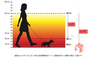 temperatura para cães