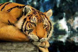 Tigre pensando