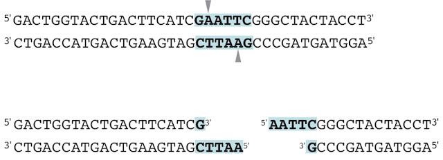 enzim restriksi pdf, enzim restriksi endonuklease, enzim restriksi dan ligase, enzim restriksi endonuklease dimanfaatkan untuk, enzim restriksi dan ligase adalah, enzim restriksi ecori, enzim restriksi endonuklease pdf, enzim restriksi endonuklease adalah