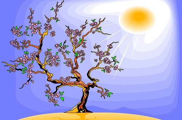 plant hormone auxin