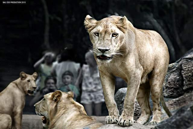 Harga Tiket Masuk Taman Kebun Binatang Bali Zoo Park - Singapadu, Sukawati, Gianyar, Bali, Liburan, Wisata, Objek Wisata, Taman Kebun Binatang Bali Zoo Park, Zoo, Biaya Tiket Masuk