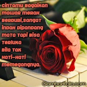 Kata Bijak Bunga Mawar Berduri Cikimmcom