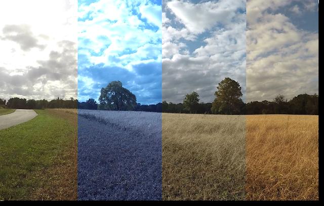 Fungsi dan Definisi White Balance Kamera Dslr