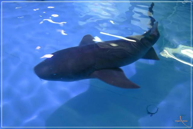 Aquário de Aparecida e os tubarões