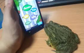 A frog playing a game on a smart phone
