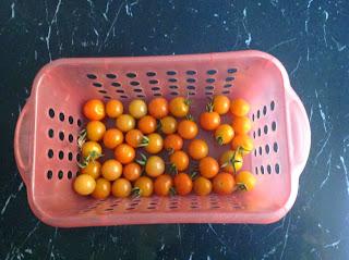 Ajantha's Garden/Vine Tomatoes