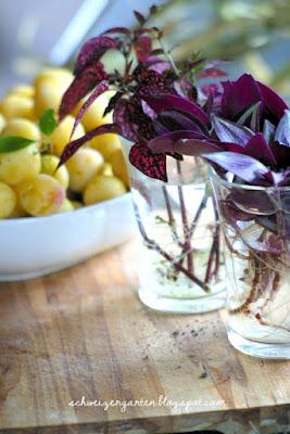 design#5001774: 9 zimmerpflanzen die leicht zu hause wachsen – (+, Garten und erstellen