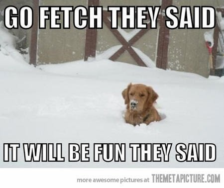 Image result for funny dogs in winter quotes