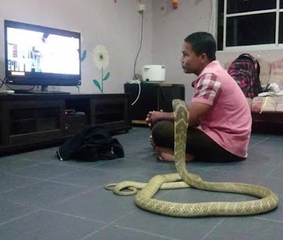 OMG!!! MAN MARRIES SNAKE AFTER LOSING GIRLFRIEND - WHAT HAPPENED AFTER IT WILL SCARE YOU
