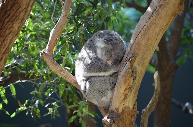LE TARONGA ZOO, en Australie - Idée tourisme, voyage Australie